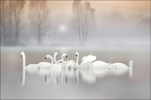 Altered Reality Royal Photographic Society Ribbon. Photographer Michael Maguire: Morning Mist